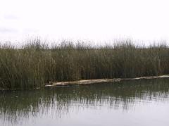 Perou 2008-04-10 08-58-03 (stephjeu) Tags: peru titicaca lac puno pérou amériquedusud