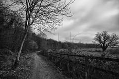 Mardyke path (dwimagesolutions) Tags: england essex northstafford davydownriversidepark mardyke bw nikond7200 sigma1020mmf456