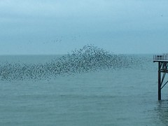 Murmuration (My photos live here) Tags: brighton east sussex england seaside sea side english channel water starlings birds murmuration flock pier