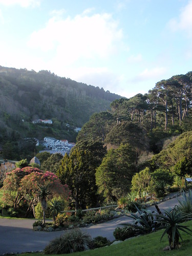A view as we come done the hill through the Wellington Botanic Gardens