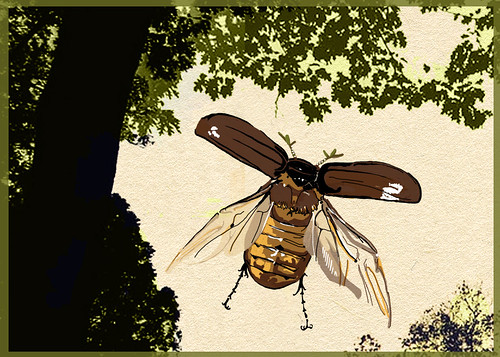 June Bug Drawing June Bug Idea
