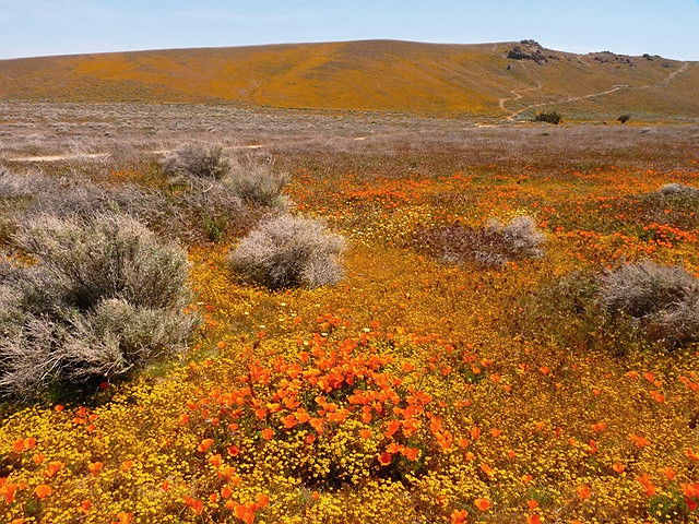 Antelope Valley Spring