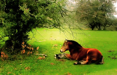 Potro/ Colt (zubillaga61) Tags: horse landscape caballo paisaje colt potro onephotoweeklycontest