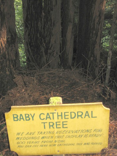 baby cathedral tree