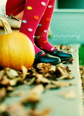 (for the love of photography) Tags: autumn fall missb pumkin mbphotography