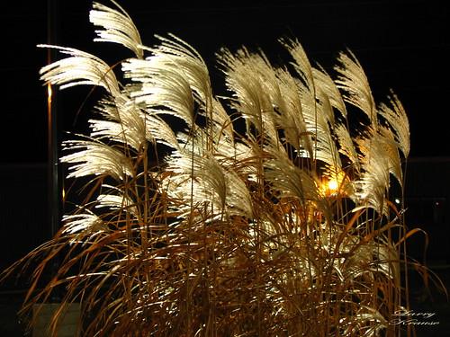 3 AM Grass