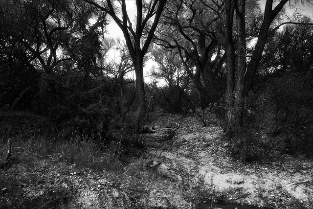 Dead Horse Ranch Path in Black and White