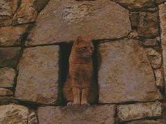 Del color de la piedra (wow_wa_cow) Tags: sunset portrait espaa naturaleza nature stone cat atardecer spain retrato asturias gato ocaso animalplanet piedra caso caleao