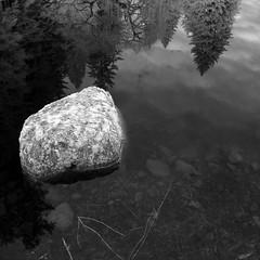 (Minette Layne) Tags: trees blackandwhite rock reflections ir washington moss pond infrared lichen bainbridgeisland digitalinfrared bloedelreserve xynw08landscapes