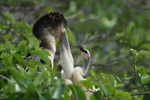 Delray Beach Nature Centers 3-8-08 389