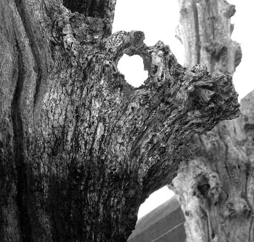Créatures féeriques des bois 2389482661_a6db99cae2