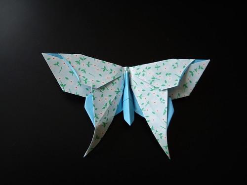 Alexander Swallowtail