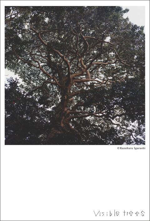 visibletrees