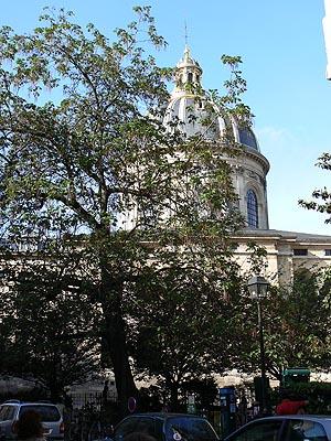 square mazarine.jpg