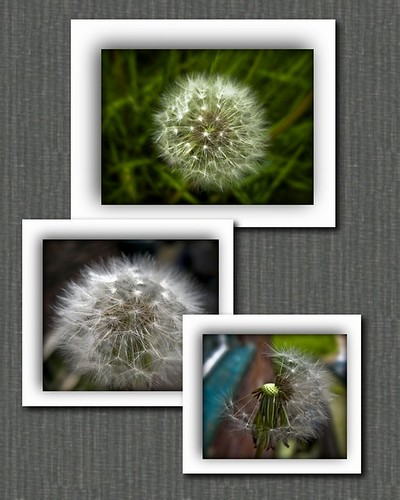 TheDandelion collage