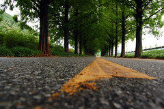 sequoia road (Jon Asay ) Tags: korea sequoia gettyimages damyang    nikond40 ilovekorea