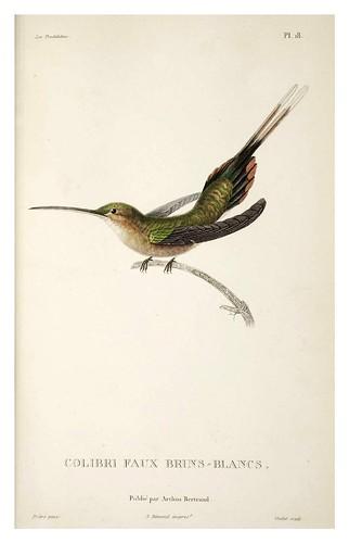023-Les Trochilidées ou les Colibris et les Oiseaux-Mouches… 1832- René Primevère Lesson- DGZ–Göttinger Digitalisierungszentrum