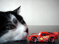 lighting mcqueen vs enormous cat (nicouze) Tags: lighting macro cars ikea cat table toy rouge chat noir flash disney voiture pixar blanc jouet mcqueen