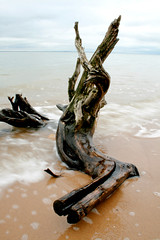 Drift (JoshuaDavisPhotography) Tags: wood blur tree beach water river sand potomac drift westmorelandstatepark