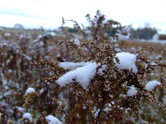 Snow on the weeds in the field