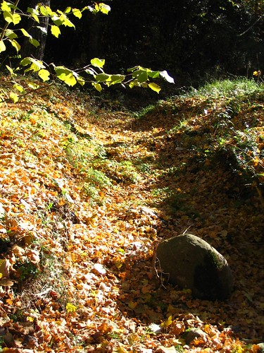Catifes de fulles omplen els camins de la tardor