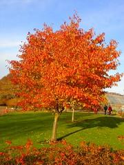 Autumn (kezwan) Tags: autumn color nature botaniskatrdgrden kezwan anawesomeshot top20autumn samsahar2
