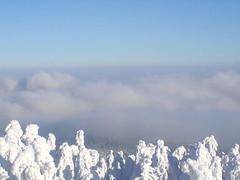 Over the Sky (jayokossa) Tags: trees snow heavens