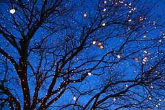 Tree in Santa's Village (daveham) Tags: texas christmaslights richardson santasvillage canonefs1022mmf3545usm richardsontexas