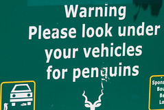 Watch for Penguins