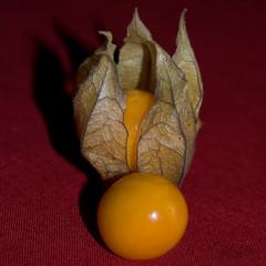 Yellow fruit (atranswe) Tags: macro sweden sverige soe cubism halland falkenberg naturesfinest blueribbonwinner physallis studioart mywinners shieldofexcellence dsc5155 lacasadelosrecuerdos nicond40 20080102