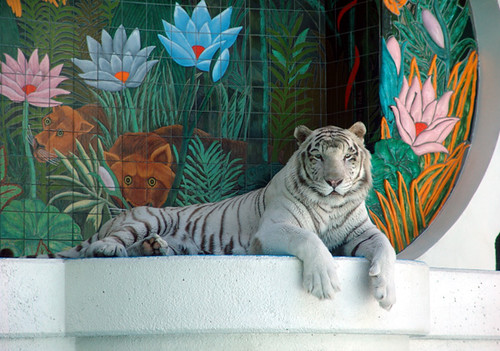 White tiger - Mirage, Las Vegas