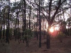 Ray of Light (Alejandro Castro) Tags: park parque winter sunset naturaleza tree nature forest landscape geotagged mexico arbol atardecer photography march photo foto sony jalisco paisaje bosque invierno fotografia 2008 ocaso marzo zapopan dscs40 colomos geoetiquetado