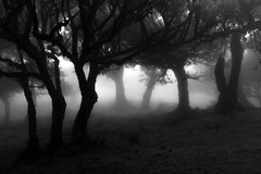 The Escape (Aymeric Gouin) Tags: madeira madère portugal europe forest wood bois foret tree arbre mist brume fog brouillard light lumière monochrome black white noir blanc bw travel voyage mood olympus omd em10 aymgo aymericgouin nature