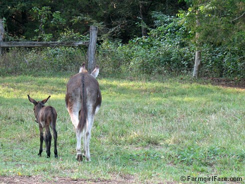 The Daily Donkey 109