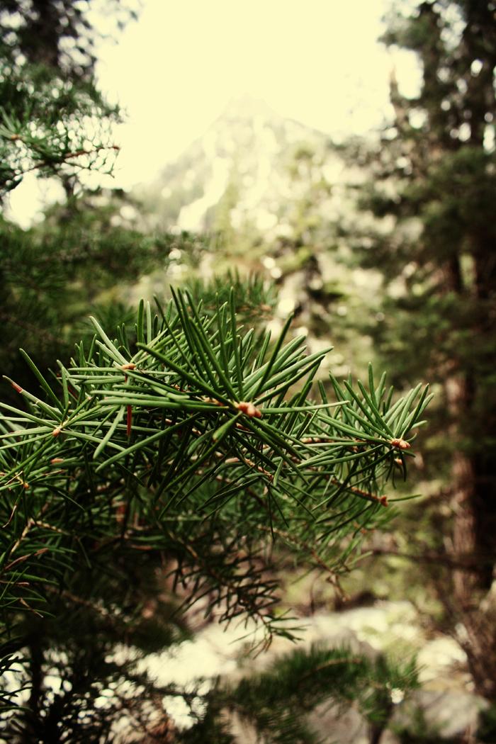 *Tree Branch*
