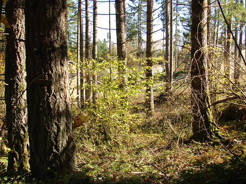 Clearwood Lot - 3