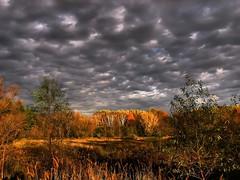 wetlands (-Chad Johnson) Tags: autumn fall colors minnesota rochester swamp wetlands rochestermn splendiferous canonpowershots3 izaakwaltonwetlands cloudysunlight