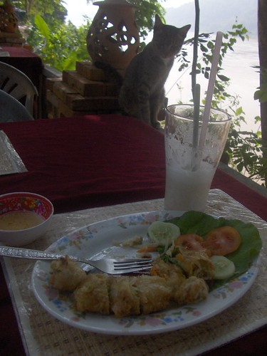 Spring Rolls and Interested Cat over the Mekong