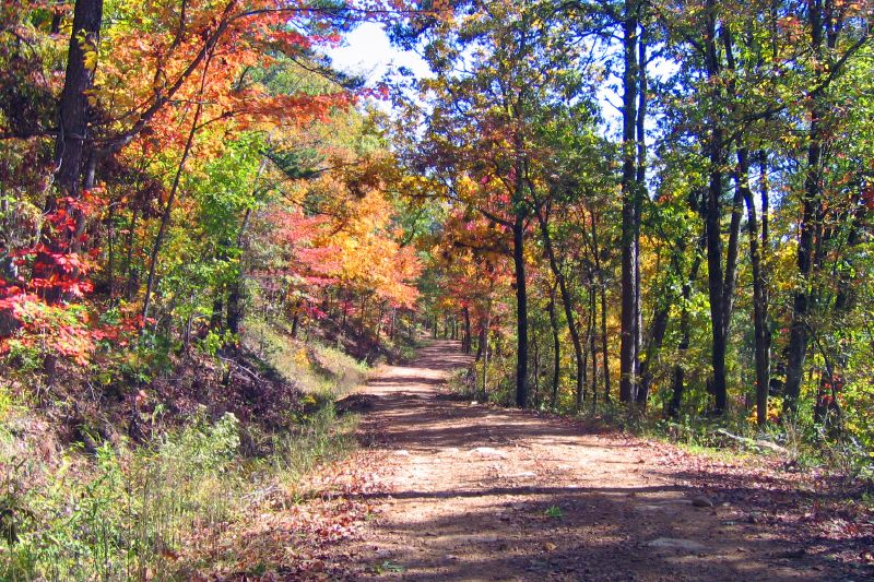 Fall Color near Mena Arkansas