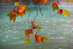 Autumn rain (koalie) Tags: autumn fall leaves river