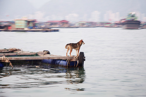 A Scene from the Floating Villages of Cat Ba - Vietnam