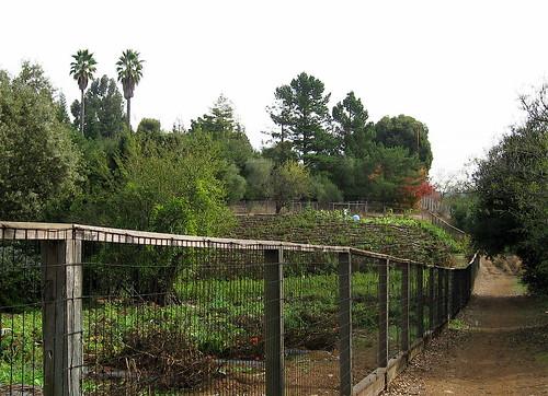 more organic gardens