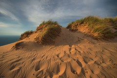 dune grass (snapstill studio) Tags: