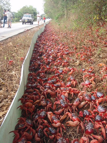 Red Crab Superhighway