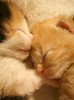 20071006_0904b (Fantasyfan.) Tags: sleeping baby cute topv111 topv2222 tag3 taggedout cat furry topv555 topv333 kitten tag2 babies tag1 tabby topv1111 small jerry topv999 kitty fluffy kittens topv777 topv3333 topv4444 2weeks fantasyfanin matchpointwinner highqualityanimals siirretty