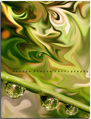 Silk / Seda (Karina Diarte) Tags: macro green nature rain droplets drops crystal silk drop bamboo filter droplet waterdrops seda karinadiarte
