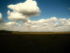 Jan 26 / IMG_4997 (tavopp) Tags: park parque sky clouds florida pantano cielo swamp nubes utata everglades evergladesnationalpark 2008 project365 tavopp