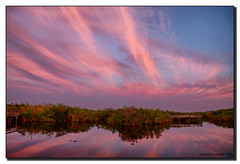Brush Strokes in the Sky (Fraggle Red) Tags: pink sky reflection clouds dawn florida evergladesnationalpark mangroves jpeg bushes hdr brushstrokes beforesunrise royalpalm enp canonefs1785mmf456isusm anhingatrail 3exp specland ilovemypic dphdr