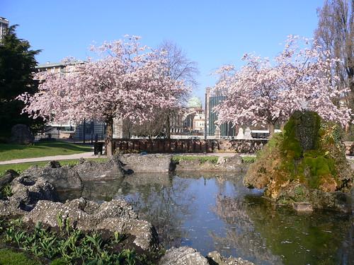 alberi di giuda ai giardini dell'arena