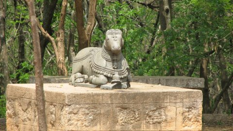 nandi opp forest inspection bungalow